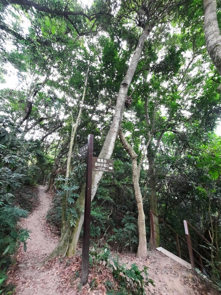 《彰化》桃源里森林步道,龍鳳谷森林步道 - 健行筆記