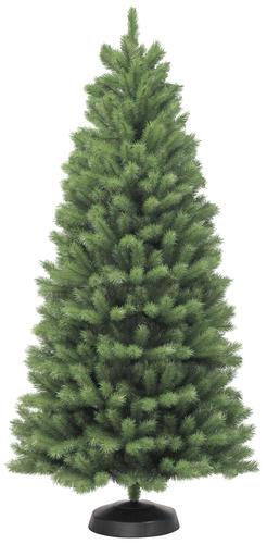 75 Northern Spruce Christmas Tree at Menards