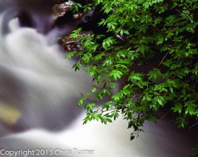 carbon river stream