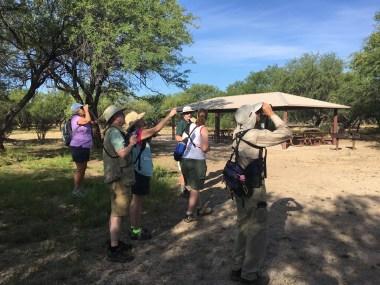 Birding in Tucson Arizona