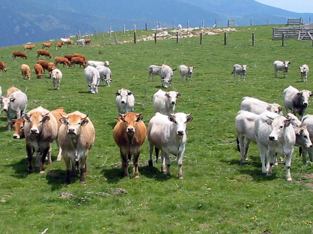 photo of pasture with cows