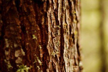 photo of tree bark