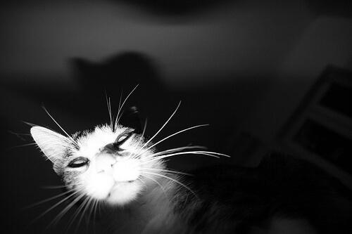photo of a cat