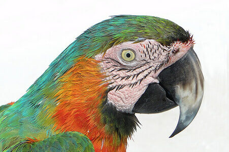 photo of a parrot