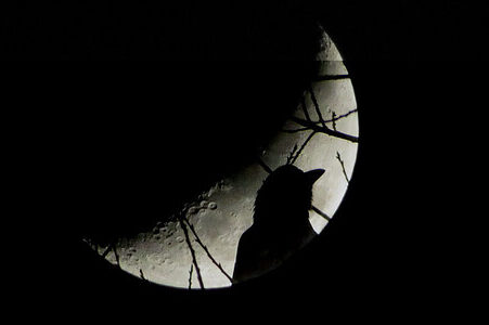 photo of crow in front of the full moon