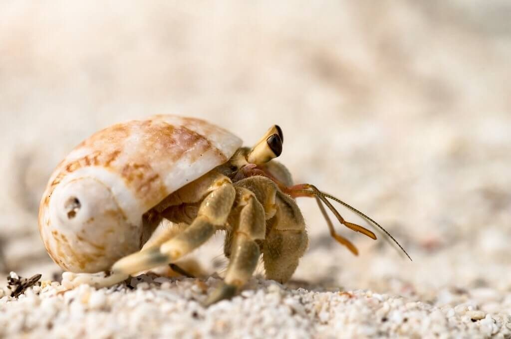 hermit crab on sand