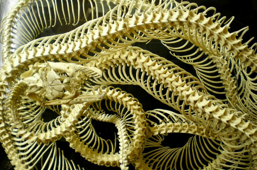 photo of snake skeleton