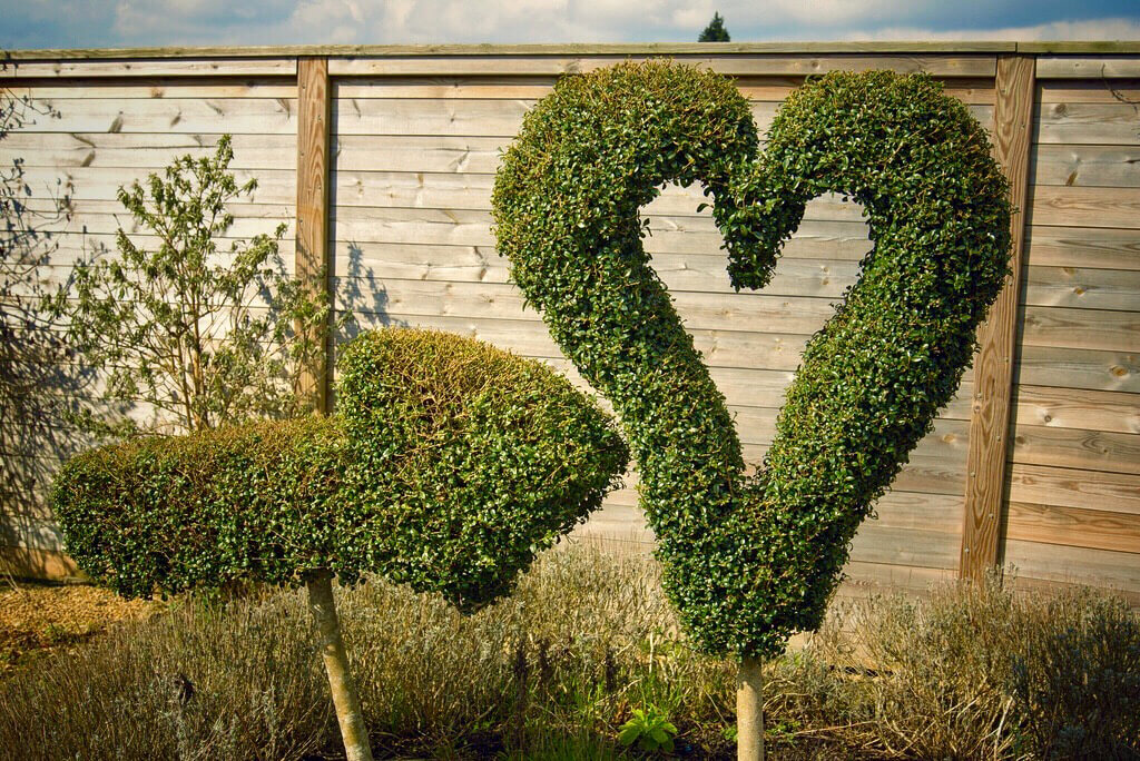 photo of heart-shaped topiary