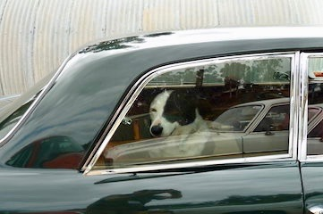 photo of a dog in a car
