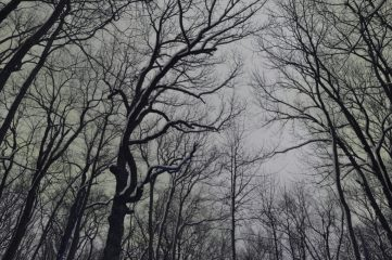 photo of trees in winter