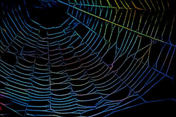 photo of spider web with neon colors
