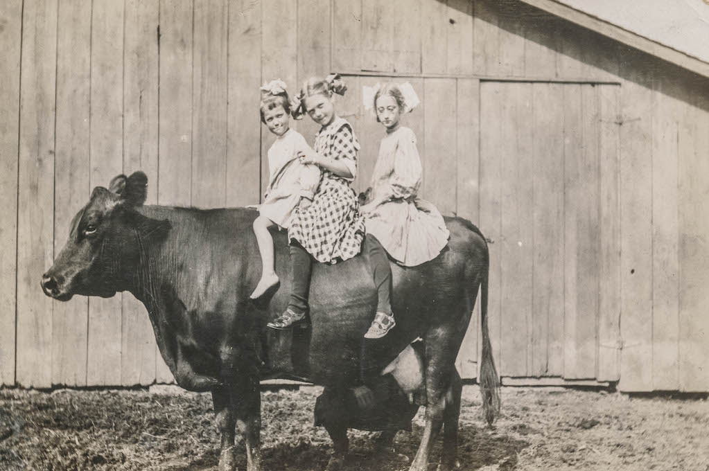 vintage photo of 3 little girls sitting on the back of a cow