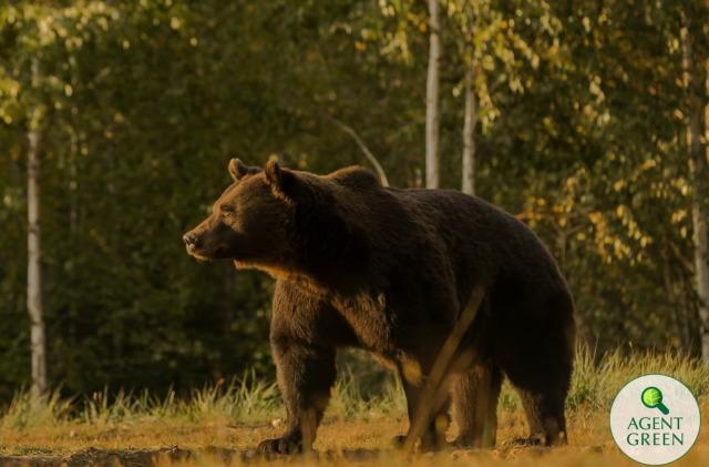 """Un prinț austriac a ucis cel mai mare urs din UE """"din greșeală"""""""