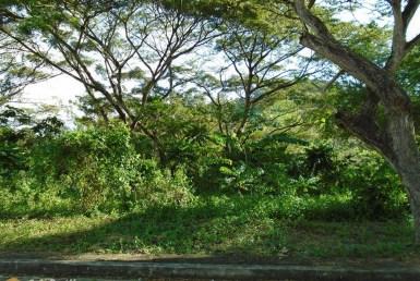 Lot for Sale in Greenwoods Cebu City
