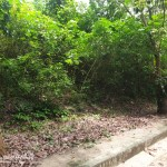 Residential Lot for Sale in Consolacion Cebu Greenville Heights