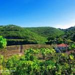 Residential Lot for Sale in Consolacion Cebu