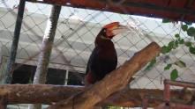 変わった鳥