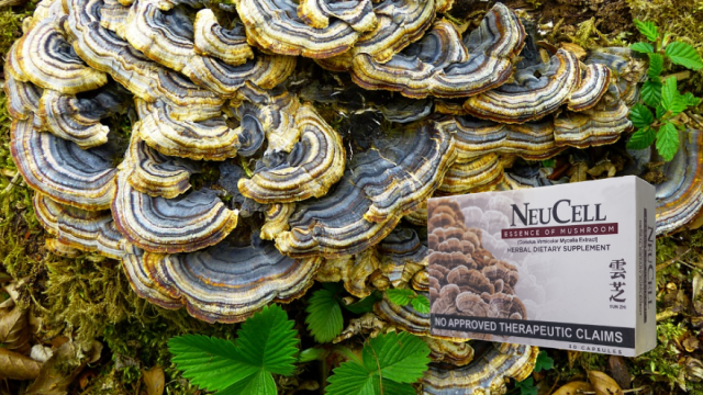 In a clinical study on the anti-fatigue properties of the Yun-Zhi mushroom published in the International Journal of Medical Sciences, it was also seen that they can improve athletic performance by reducing fatigue. | CebuFinest