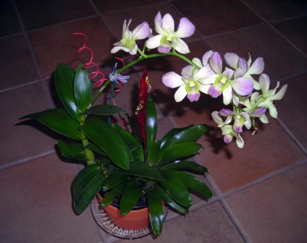 Farm Bromeliad Orchid Combo 11-19-08