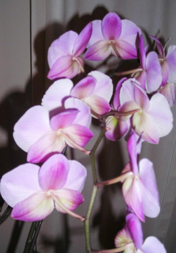Farm Flowers 1-7-10 (6)