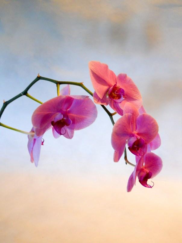 Orchids 2014 (2)