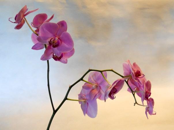 Orchids 2014 (3)