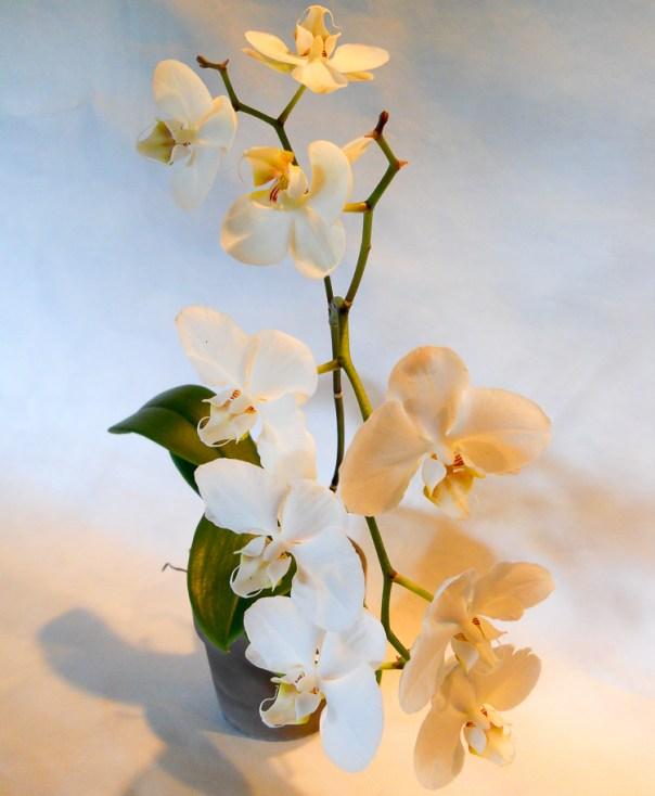 Orchids 2014 (4)