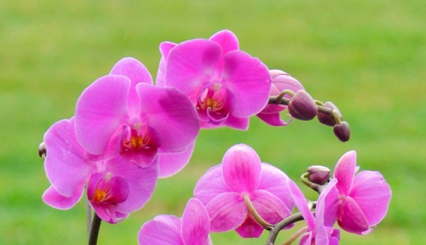 Orchids 3-18-12 (7)