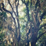 I'm in love with Spanish Moss