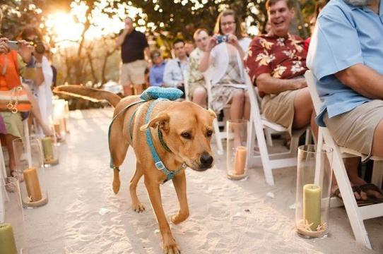 9-adorable-ways-to-include-your-pup-dog-wedding-ideas