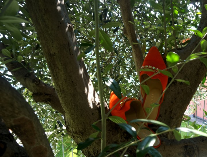 mules i träd.jpg