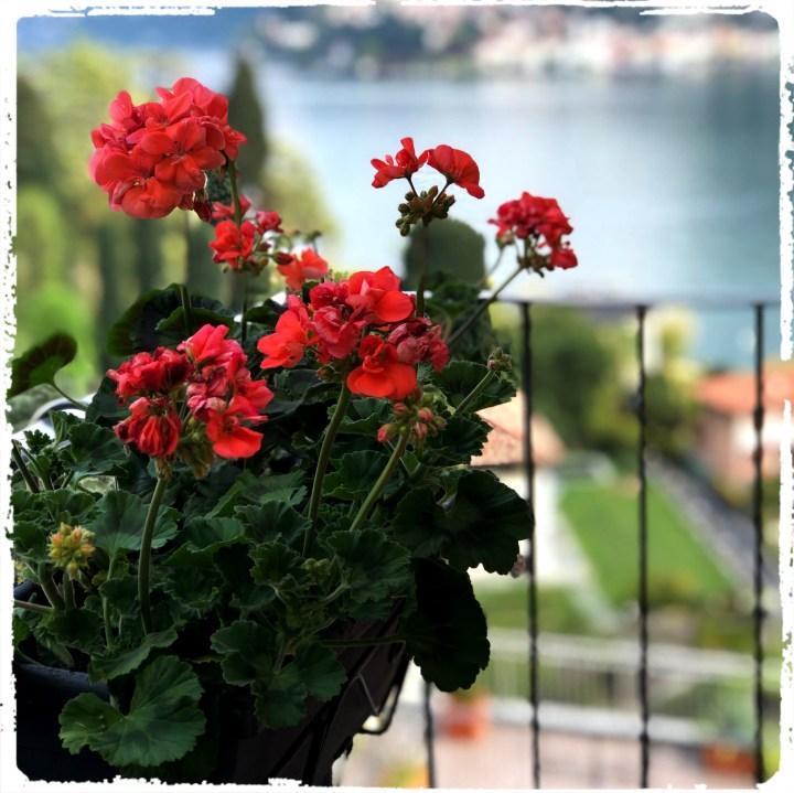 balkong blommor.jpg