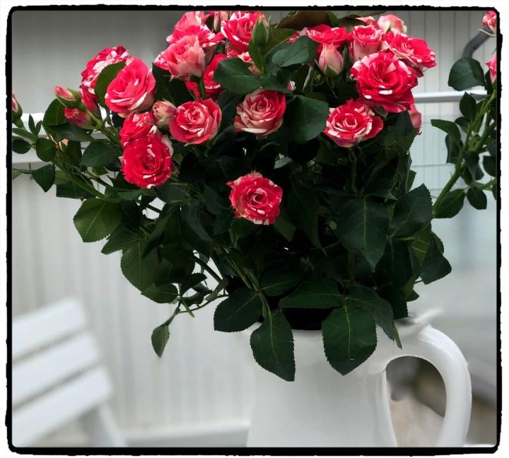 mer rosor.jpg