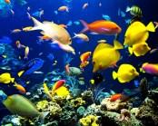 Great-Barrier-Reef-15 (c) rsvlts (dot) com