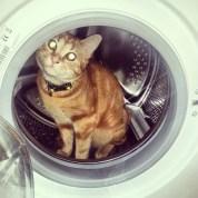 Cat in washing machine Greenhouse