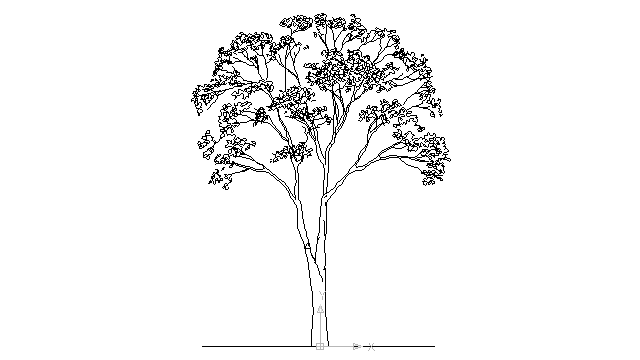 Autocad drawing deciduous trees 1 dwg