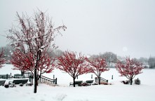 Winter scene of Cravath Lake with snow and trees with red berries