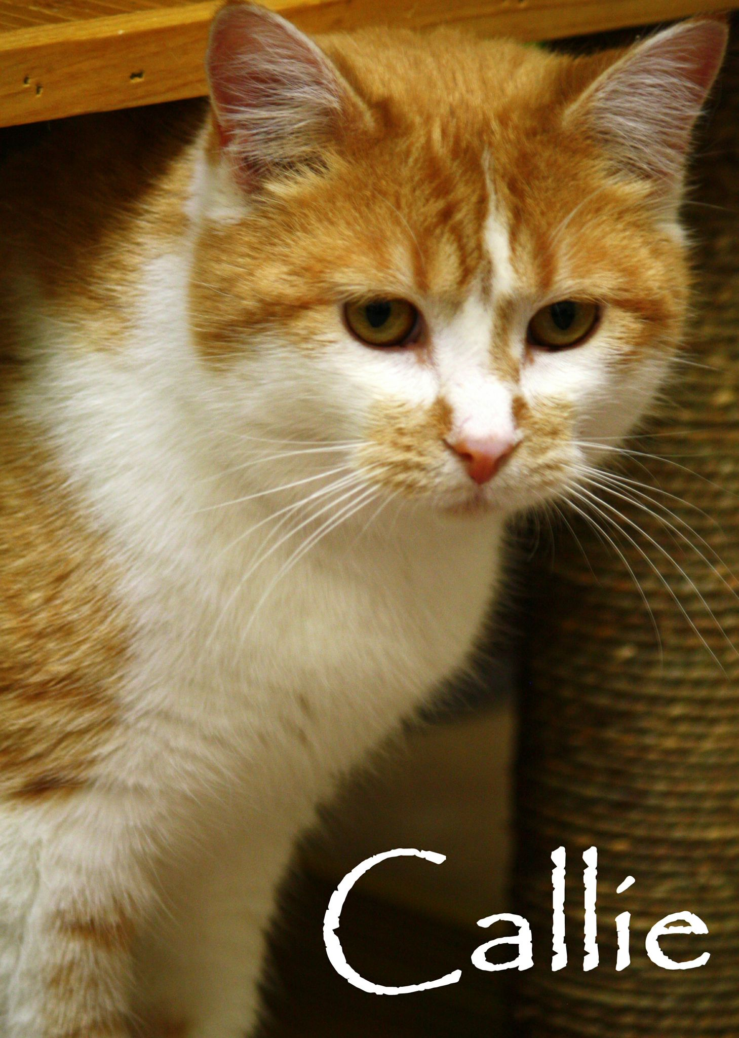 Cats Available For Adoption This Blog Is Affiliated