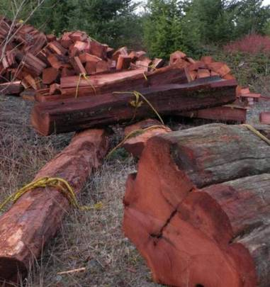 Western Red Cedar Blocks