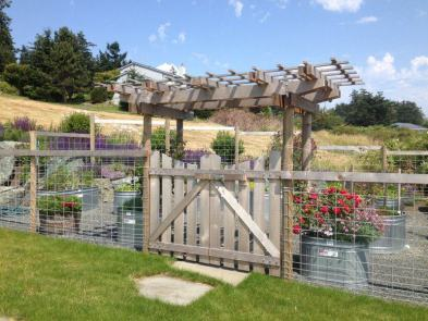 Western Red Cedar and Galvanized Hog Wire Garden Fence