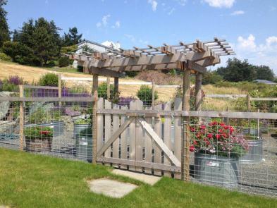 Western Red Cedar and Galvanized Hog Wire Garden Fence