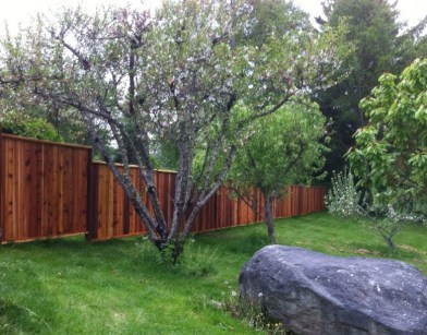 Western Red Cedar Privacy Fence