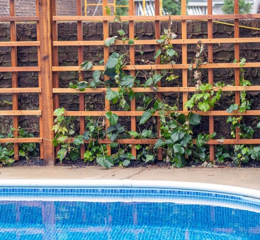 Living privacy fence made from naturally rot resistant Western Red Cedar frame work