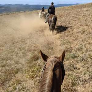 Accessible only by foot or pack animal, Kaplan Homes mounted horses and carried the Western Red Cedar shakes needed to re-roof the fire lookout at Mule Peak