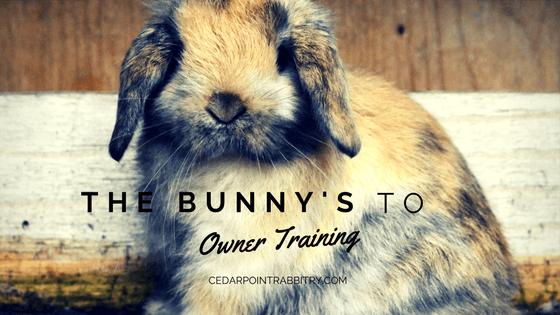 The Bunny's Guide to Owner Training