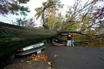 hurricane-sandy-my-shot-tree_60877_600x450