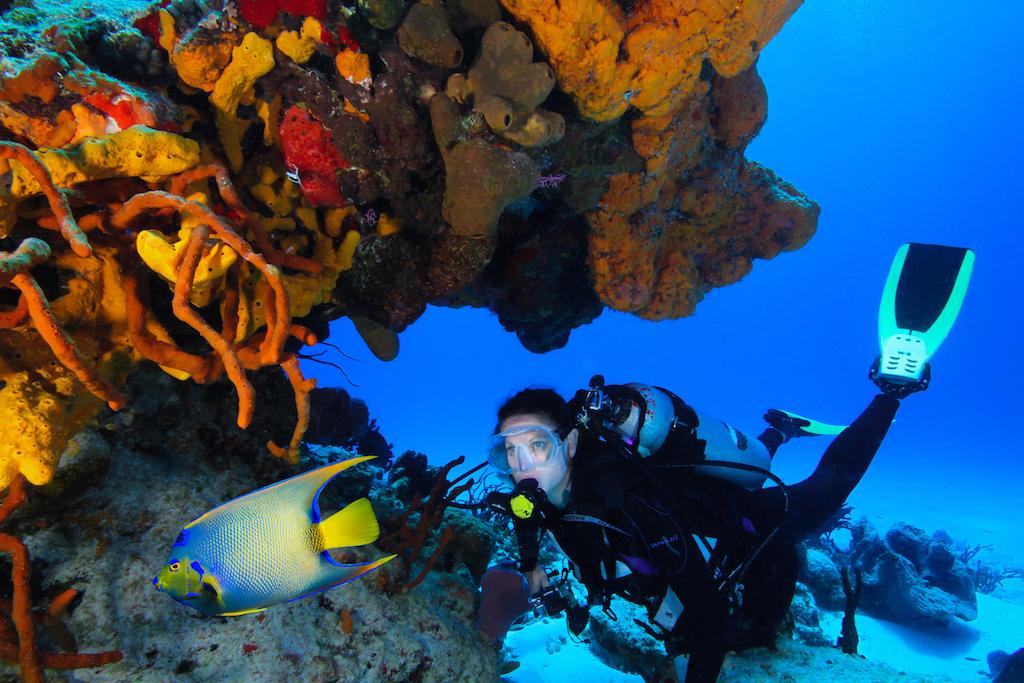 czp_Aqua Safari Diver 2