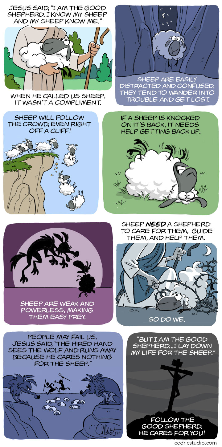 021717-Sheep