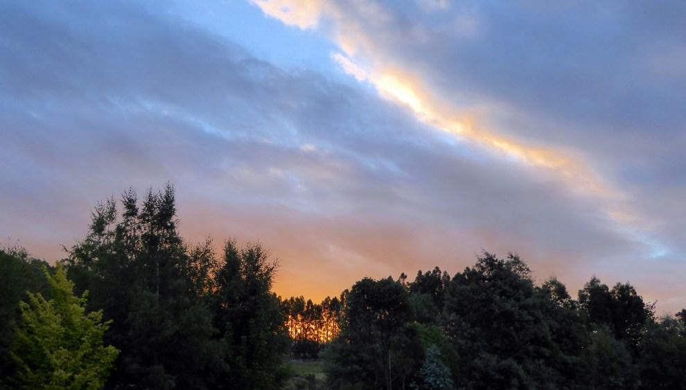 Gold Sunset
