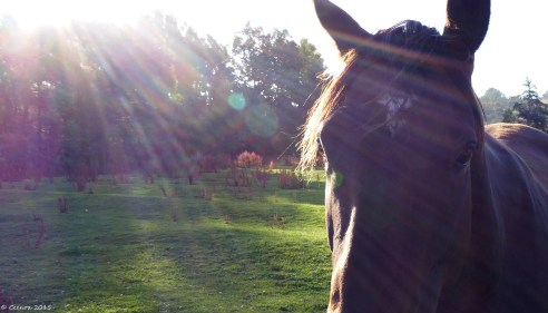 Sunbeam & Horse